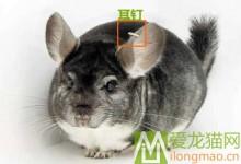 耳钉龙猫是什么 耳钉龙猫值得买吗?