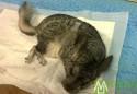 龙猫中暑症状及治疗 龙猫中暑怎么办