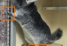 龙猫足线是什么意思 龙猫足线图片说明