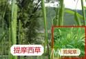 提摩西草种类介绍及选购方法