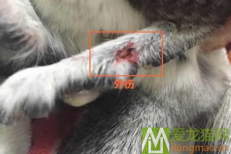龙猫打架外伤图片