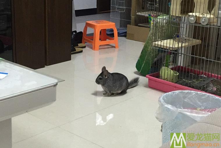 龙猫活动图片